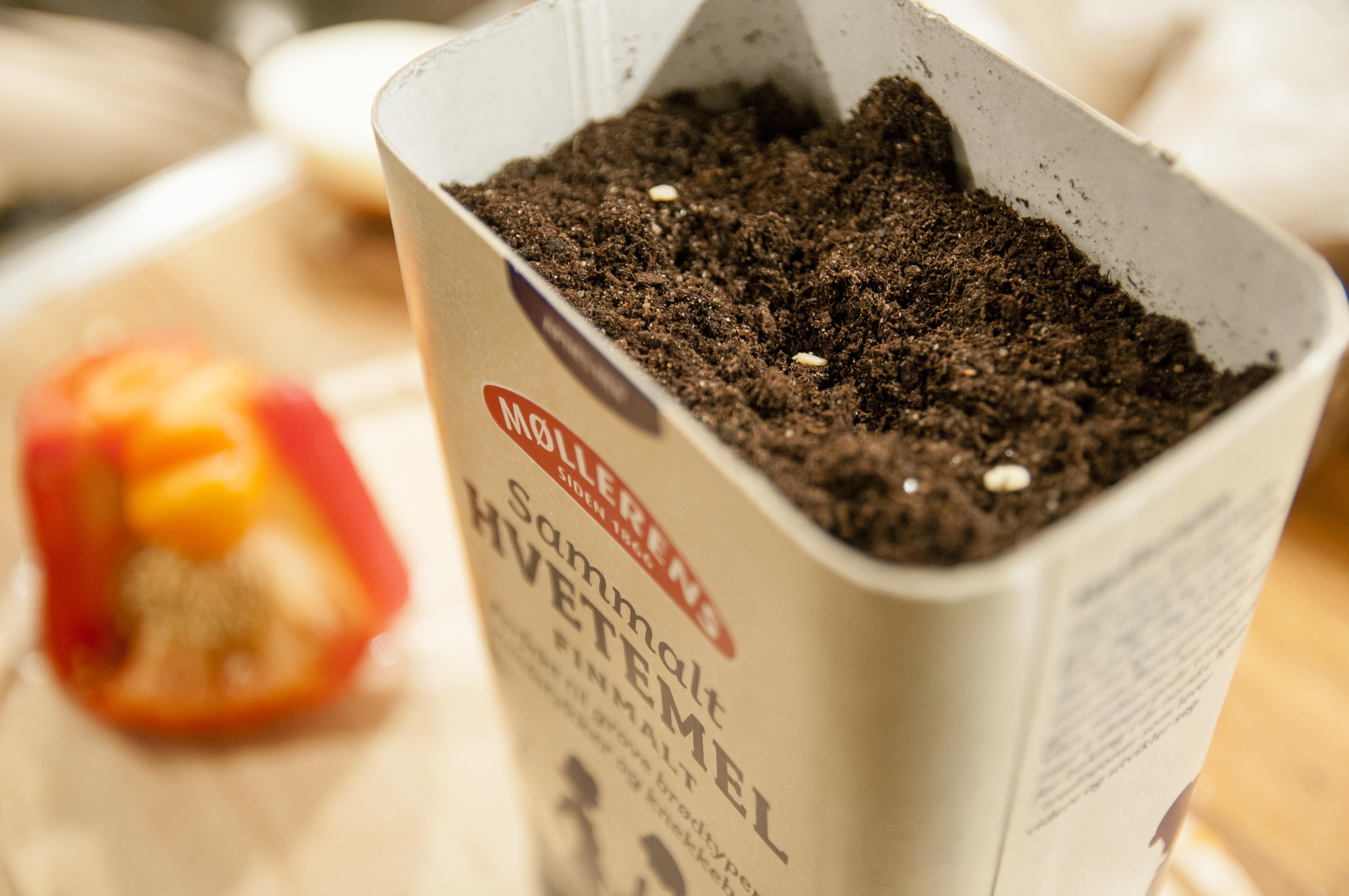 Paprika, dill og ruccola plantet