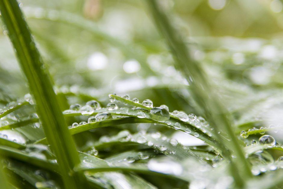 Hagen etter regnet